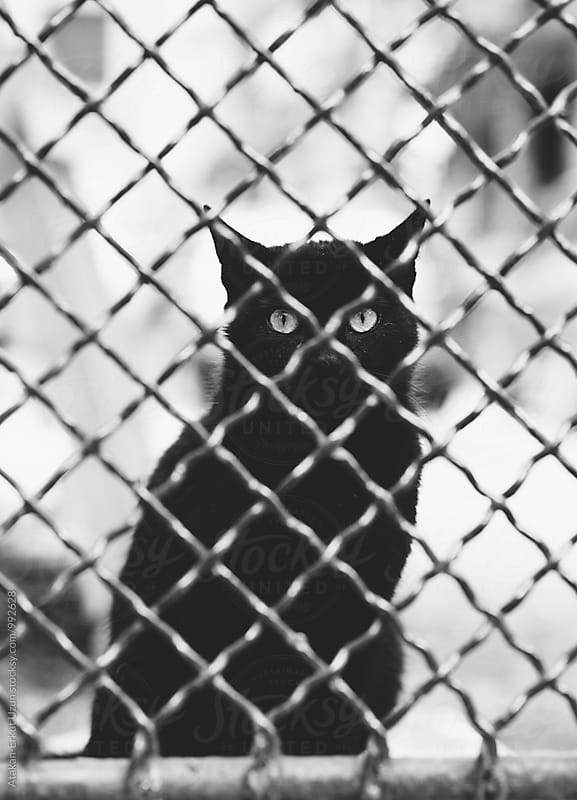 Black Stray cat looking through fence by Atakan-Erkut Uzun for Stocksy United