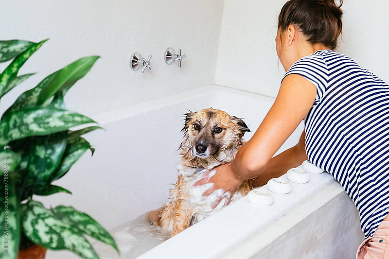 Dog unimpressed about being washed in the bath by its owner by Micky Wiswedel for Stocksy United