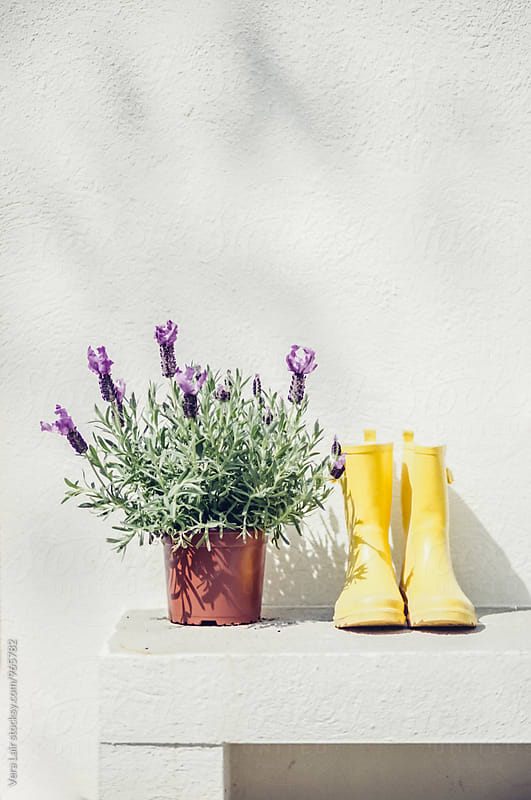 Lavender and yellow rubber boots by Vera Lair for Stocksy United