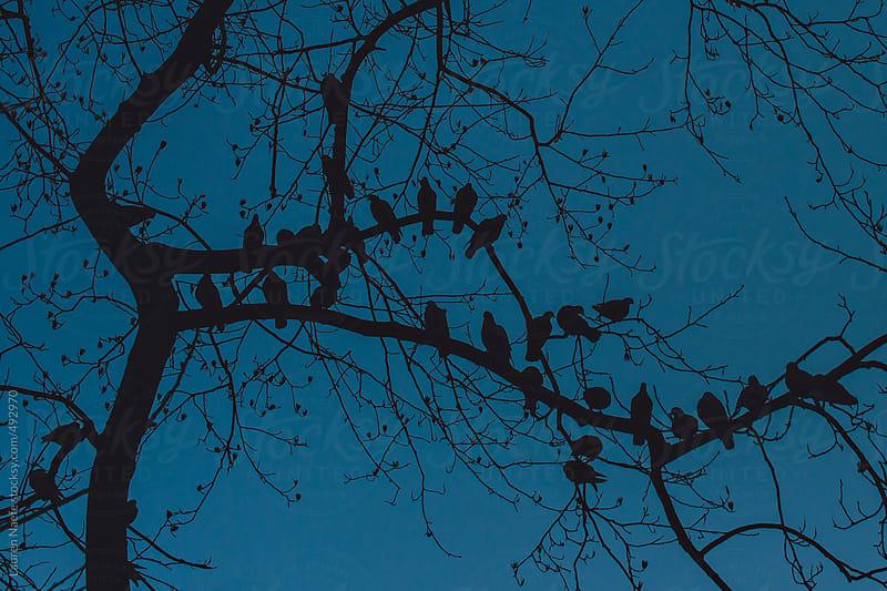 Birds at dusk by Lauren Naefe for Stocksy United