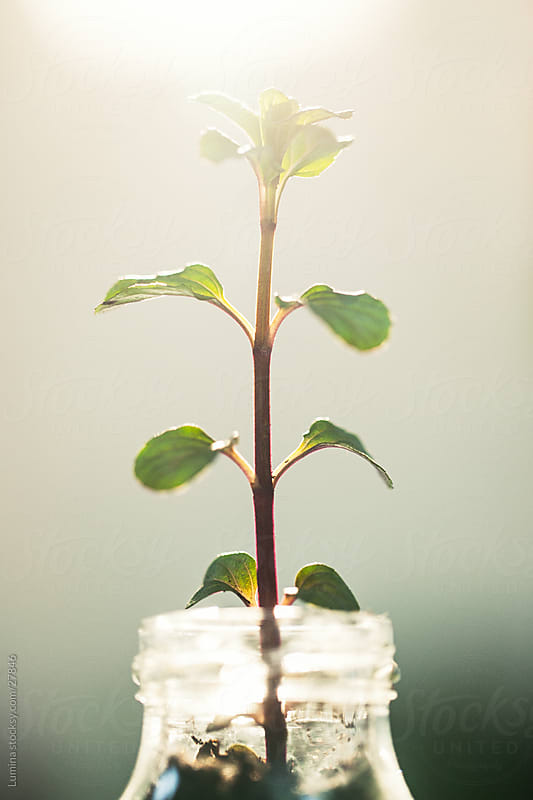 Plant Growing From a Bottle by Lumina for Stocksy United