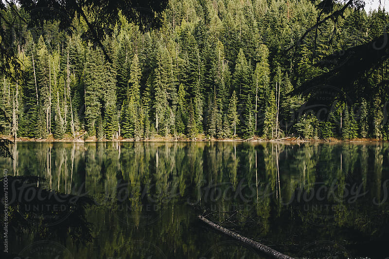 Perfectly still lake and reflection of pine trees by Justin Mullet for Stocksy United