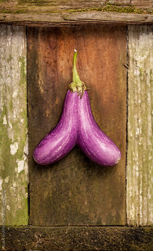 Siamese Eggplant by alan shapiro for Stocksy United
