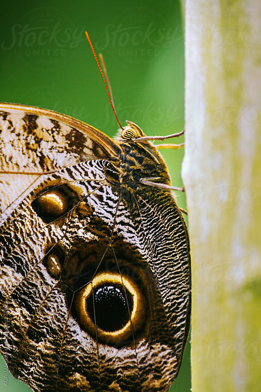 Butterfly on green branch by ACALU Studio for Stocksy United