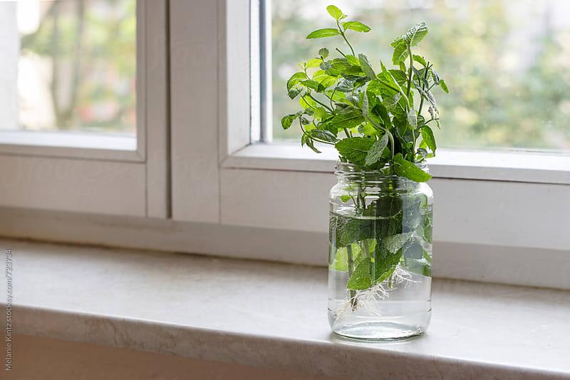 Bunch of mint in a glass on windowsill by Melanie Kintz for Stocksy United