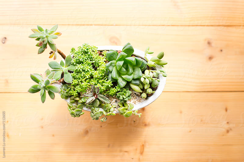 Small potted plants on wooden case in home  by Lawren Lu for Stocksy United