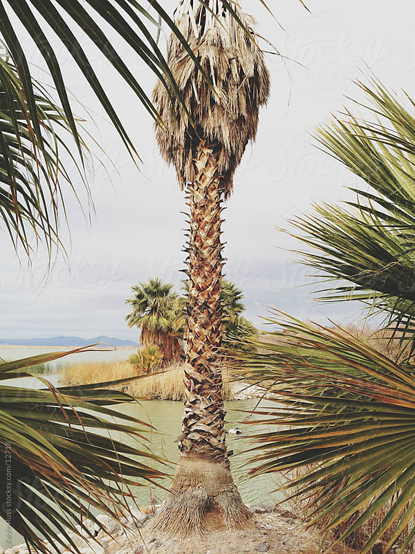 Arizona Palms by Kevin Russ for Stocksy United