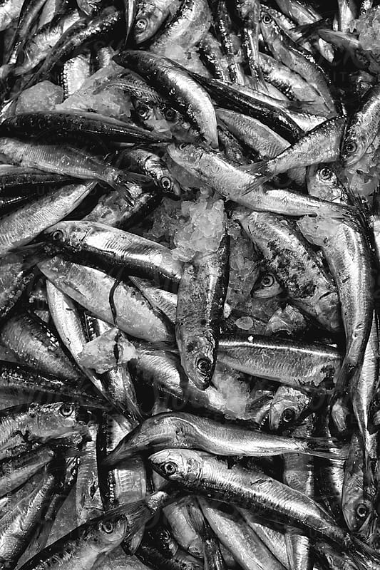 Sardines in b&w by Marcel for Stocksy United