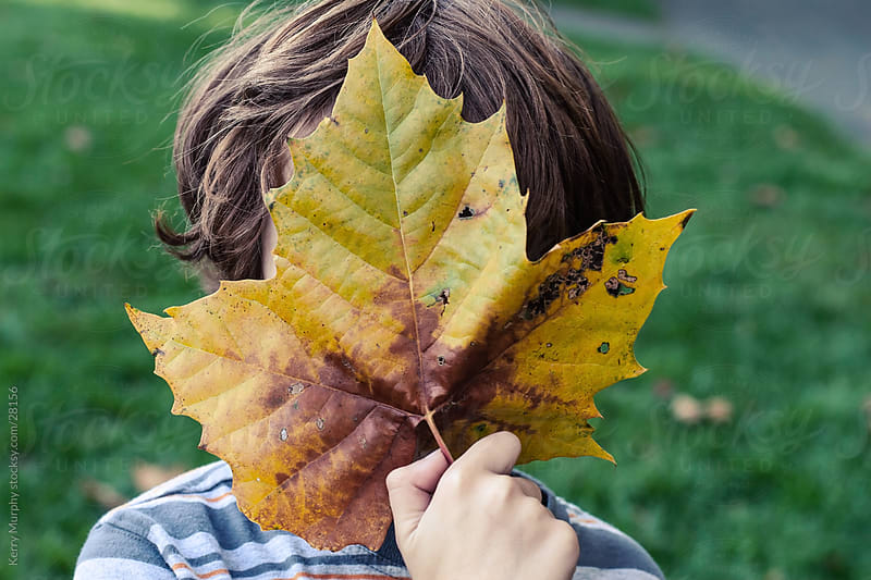 Young boy with autumn leaf by Kerry Murphy for Stocksy United