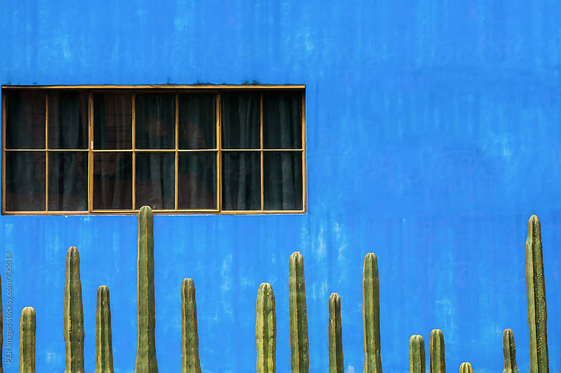 Row of fence post cactus at vivid blue wall by Per Swantesson for Stocksy United