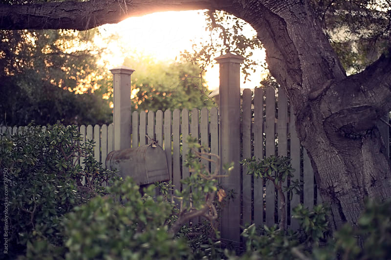 Mailbox hidden near fence with giant tree in late afternoon light by Rachel Bellinsky for Stocksy United