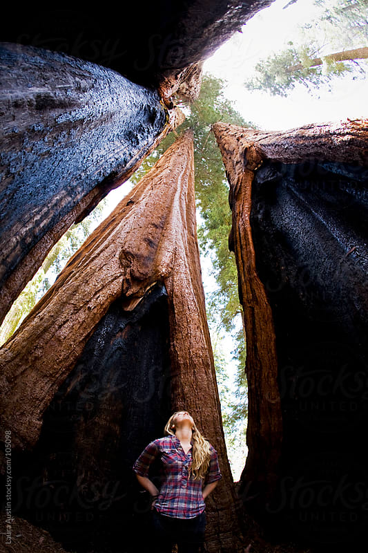 Young Woman Standing Between Massive Trees by Laura Austin for Stocksy United