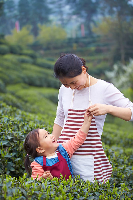 little asian girl picking tea in the tea farm with her mother by Bo Bo for Stocksy United