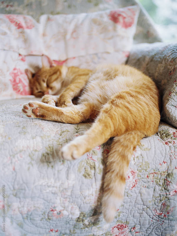 Red cat enjoying a nap while laying on armchair, film by Laura Stolfi for Stocksy United
