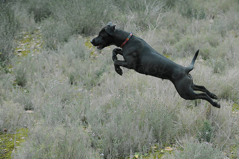 Jumping dog by Jose Coello for Stocksy United