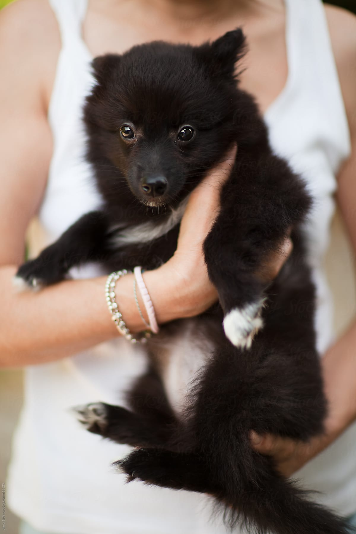 Close Up Of Woman S Arm Holding Tight A Black Pomeranian Puppy Dog By Laura Stolfi Stocksy United