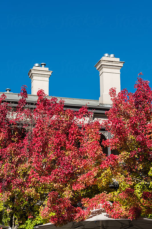 autumn colours against a tin roof and chimney stack by Gillian Vann for Stocksy United