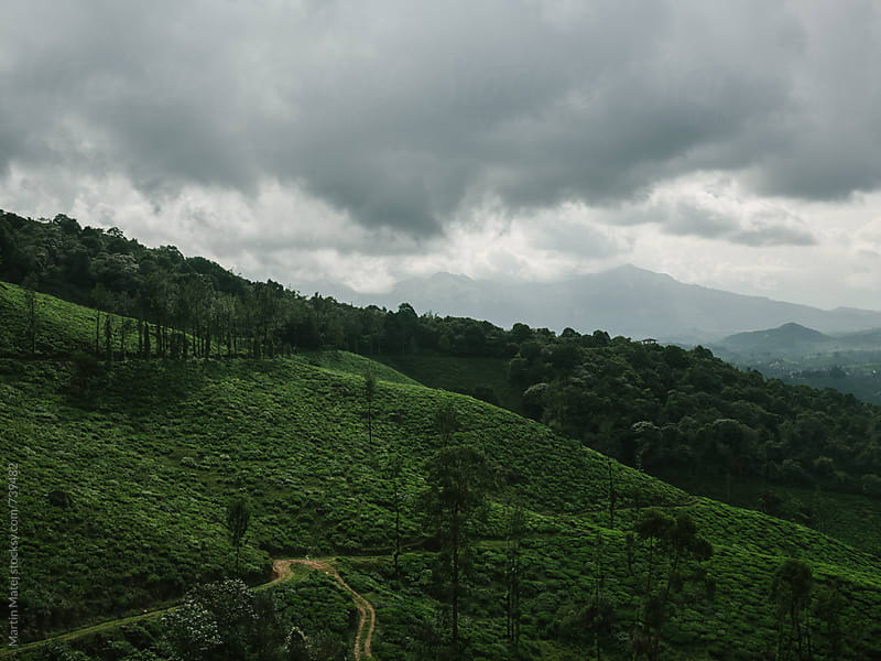 Tea Plantation under Chembra Peak by Martin Matej for Stocksy United