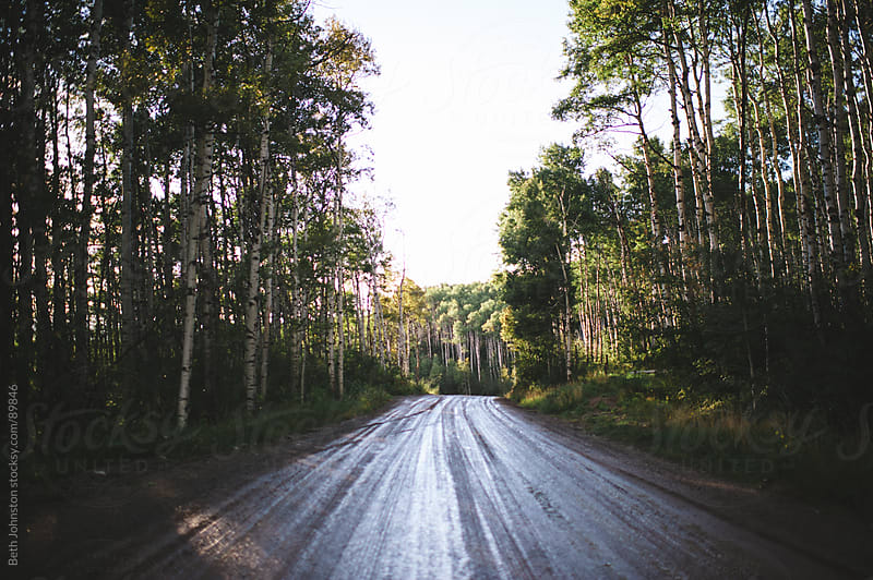 Dirt Road through Aspens by Beth Grimes for Stocksy United