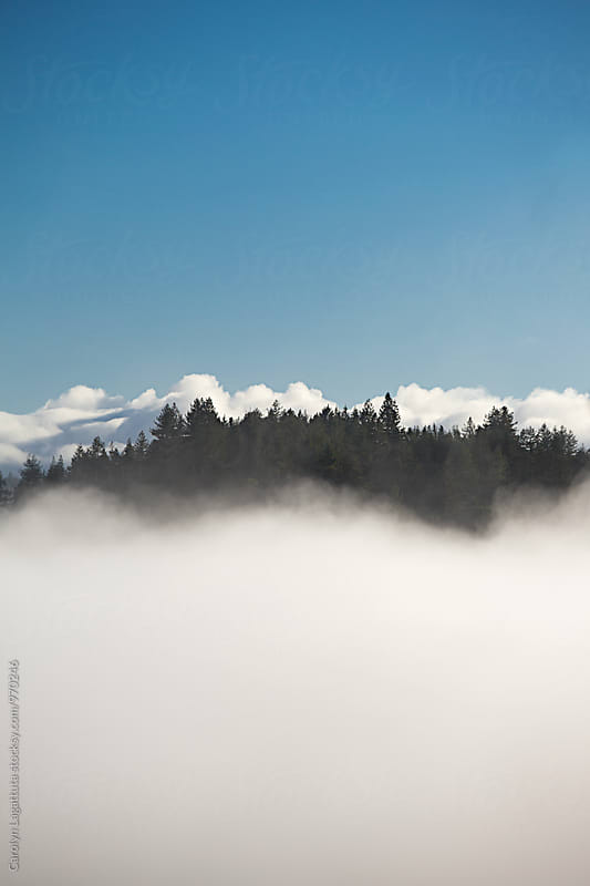 Treetops being swallowed up by the fog by Carolyn Lagattuta for Stocksy United