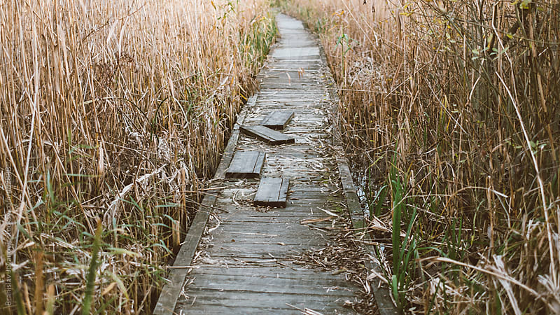 Wooden Path through the Swamp by Brkati Krokodil for Stocksy United