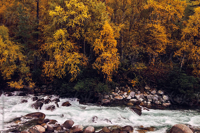 River During Fall by Jeff Marsh for Stocksy United