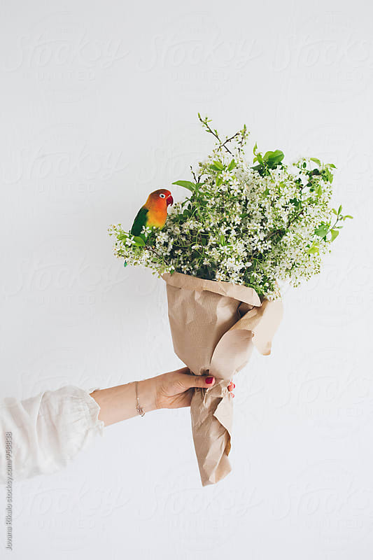 Young woman holding cherry blossom bouquet, parrot standing on her hand by Jovana Rikalo for Stocksy United
