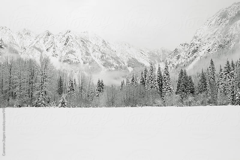 trees and mountains in snow by Cameron Zegers for Stocksy United