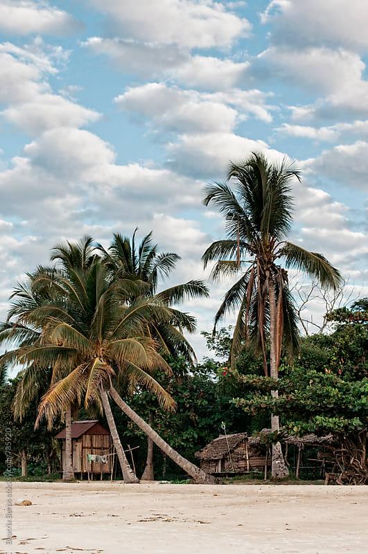 Palm tree background on white sandy beach by Beatrix Boros for Stocksy United