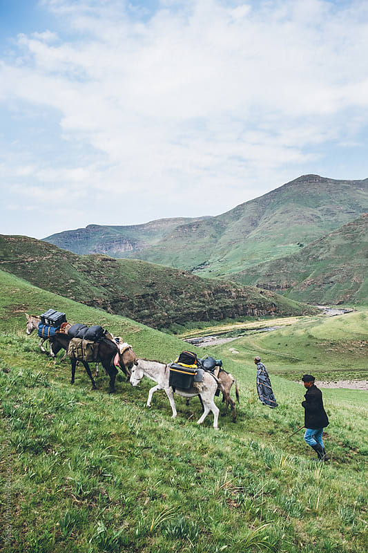 Basotho herdsmen and their pack donkeys trekking in the Lesotho mountains by Micky Wiswedel for Stocksy United
