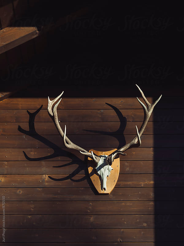 Deer antler on old wooden wall by Juri Pozzi for Stocksy United