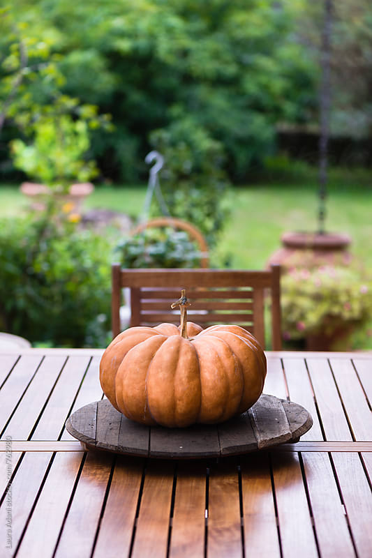 Round pumpkin on a table  by Laura Adani for Stocksy United