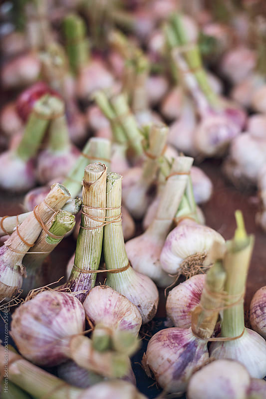 Garlic at the local market by Helen Sotiriadis for Stocksy United