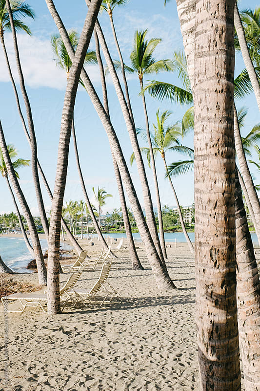 beach in Hawaii with palm trees  by Matthew Linker for Stocksy United