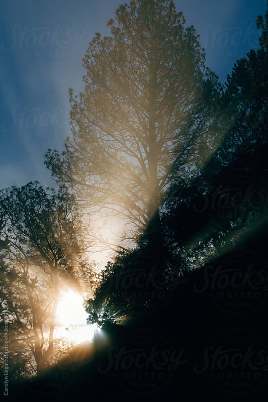 Morning sun rays streaming through the trees by Carolyn Lagattuta for Stocksy United