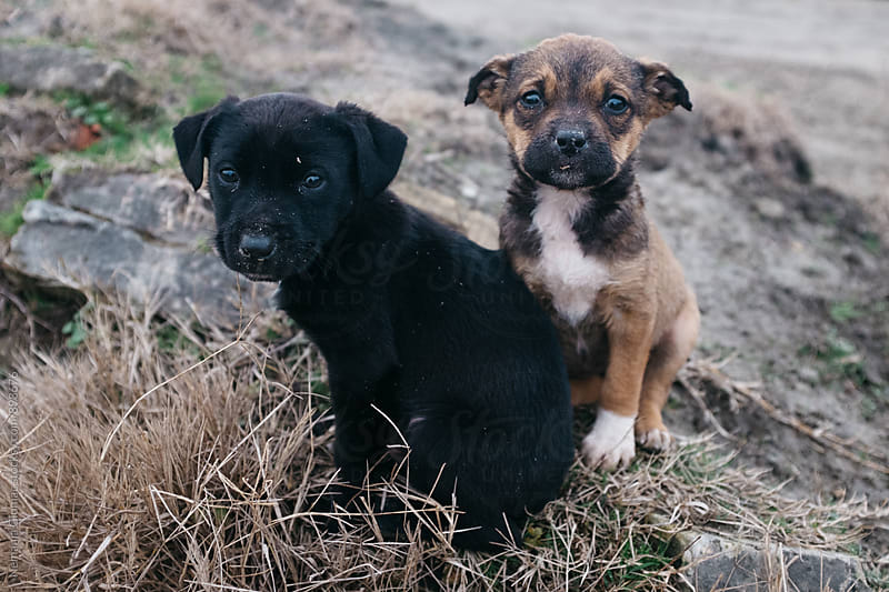 Two Cute Stray Dog Pups by Nemanja Glumac for Stocksy United