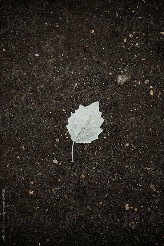 white leaf over black terrain by Javier Pardina for Stocksy United