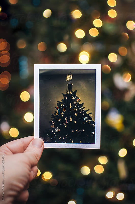 Hand Holding Photo of a Christmas Tree by Deirdre Malfatto for Stocksy United