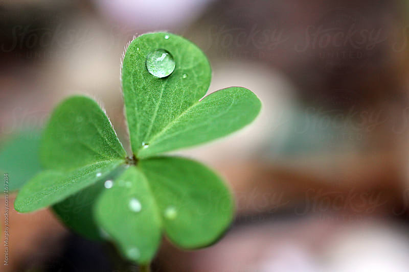 Single water drop on a clover by Monica Murphy for Stocksy United
