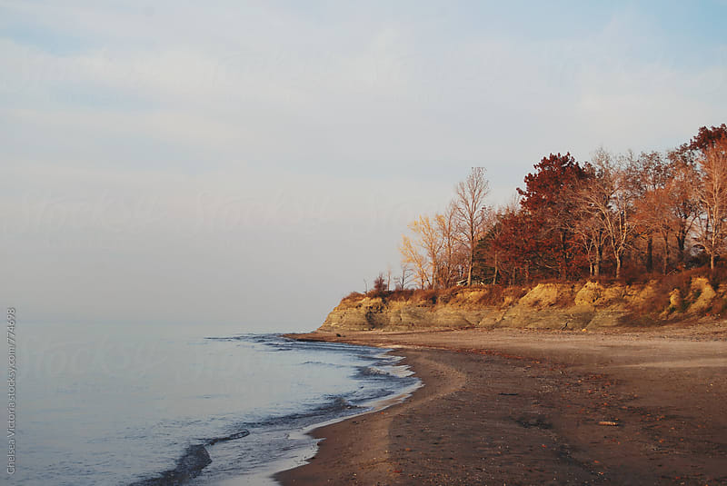 Trees turning color in autumn on the beach by Chelsea Victoria for Stocksy United