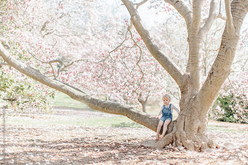 little girl sitting on a huge flowering tree in spring by Meaghan Curry for Stocksy United