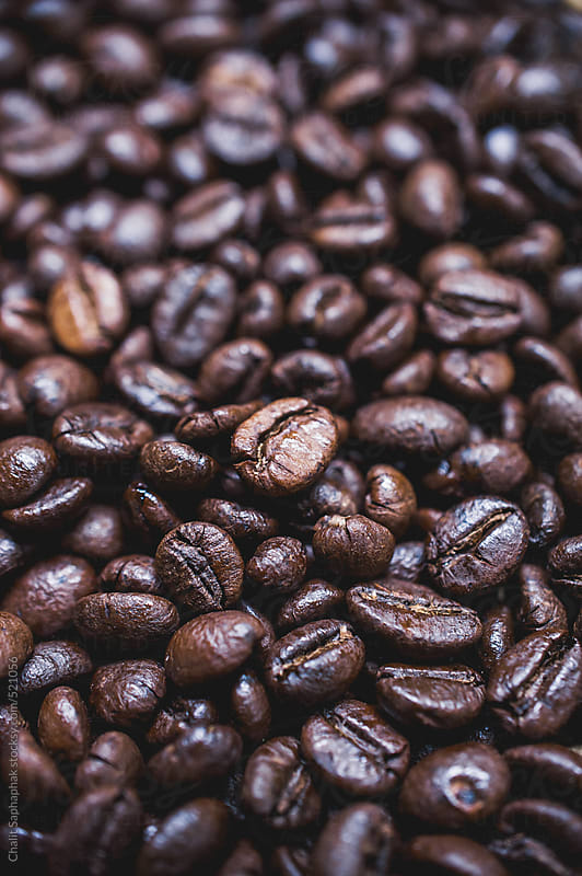 Robusta coffee by Chalit Saphaphak for Stocksy United