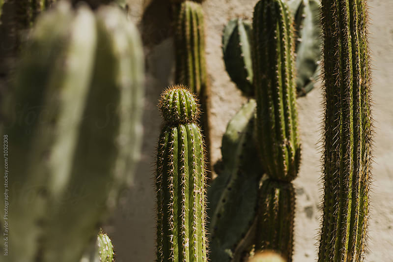 Cactus Detail by Isaiah & Taylor Photography for Stocksy United