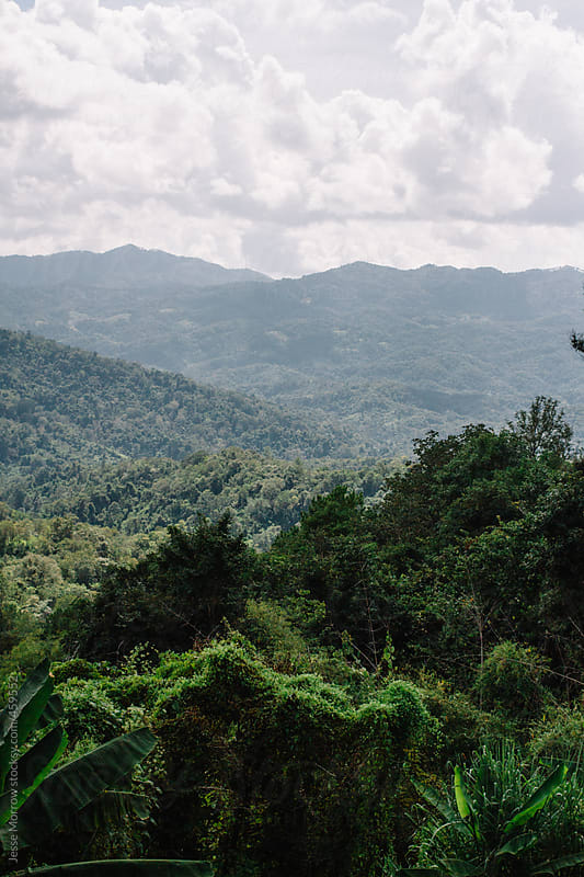 Thick jungle in thailand lanscape by Jesse Morrow for Stocksy United