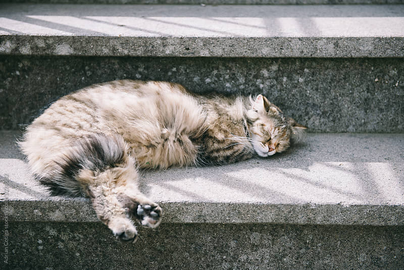 Cat sleeping on stair by Adrian Cotiga for Stocksy United
