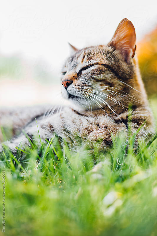 Cat in the grass by Dimitrije Tanaskovic for Stocksy United