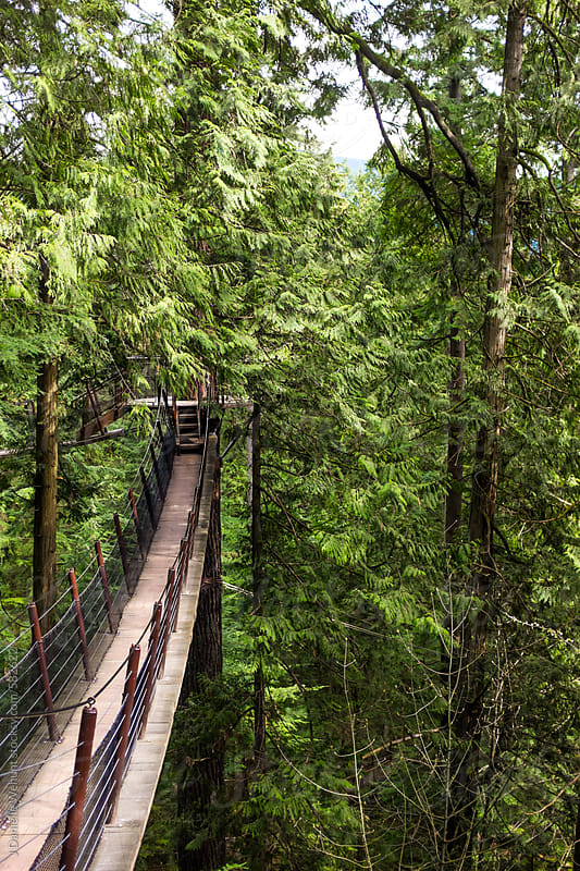 Suspension Bridge in the forest. by J Danielle Wehunt for Stocksy United