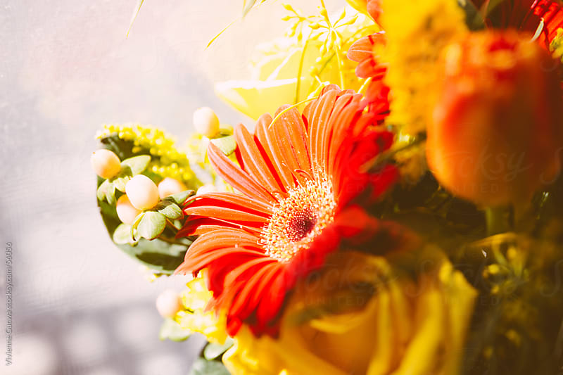Colorful Flowers in Sunlight by Vivienne Gucwa for Stocksy United