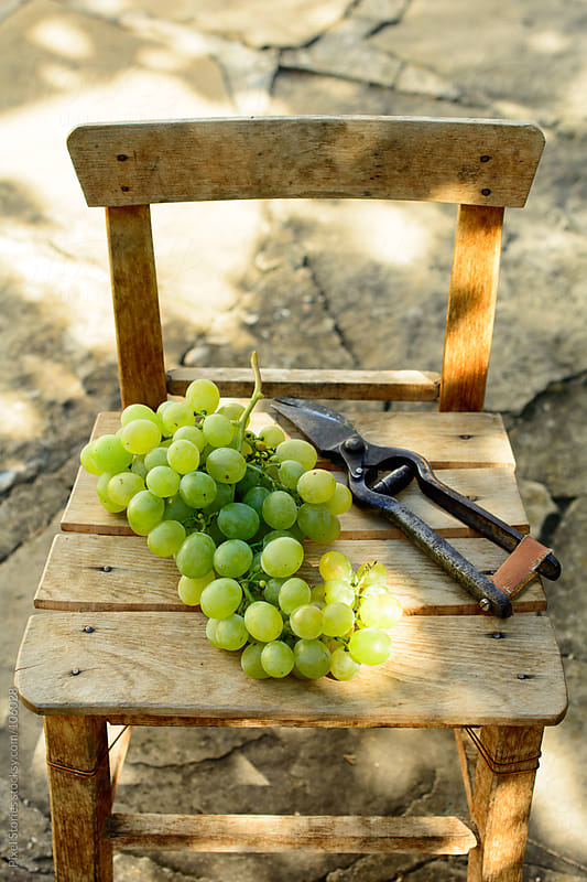 Grape and shears by Pixel Stories for Stocksy United
