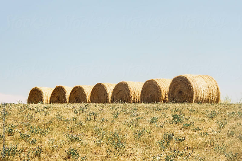 Hay bales by Per Swantesson for Stocksy United